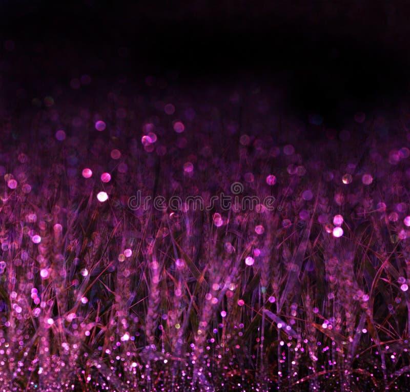 Campo de trigo y luces púrpuras del bokeh filtrado imagenes de archivo