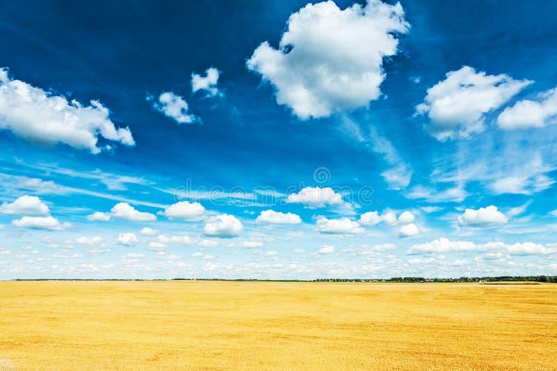 Download Campo De Trigo Y Opinión Nublada Azul Del Cielo De La Altura Foto de archivo - Imagen de harvesting, color: 42440300