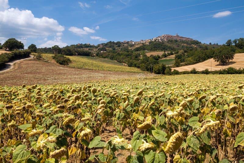 Campo de Tuscan imagens de stock