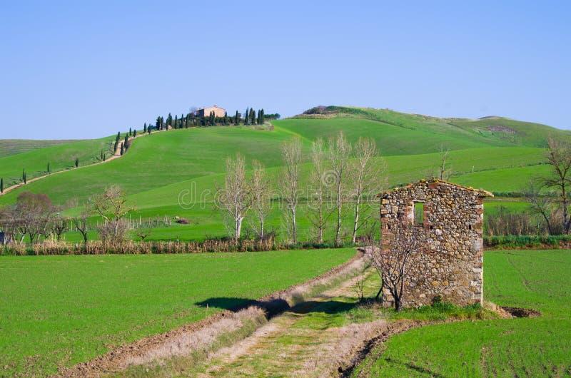 Campo de Tuscan com exploração agrícola e fileiras das árvores com ruína foto de stock