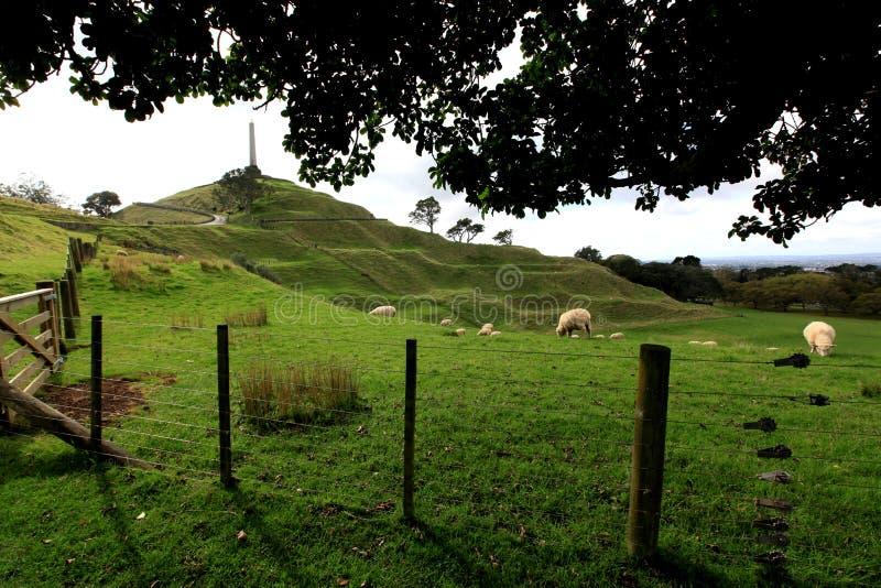 Campo de una colina del árbol imagen de archivo libre de regalías