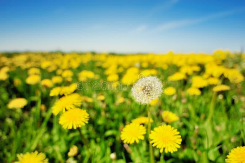 Download Campo de visão foto de stock. Imagem de flora, amarelo - 26507536