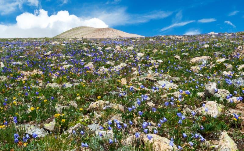 Campo de Wildflowers do verão fotografia de stock