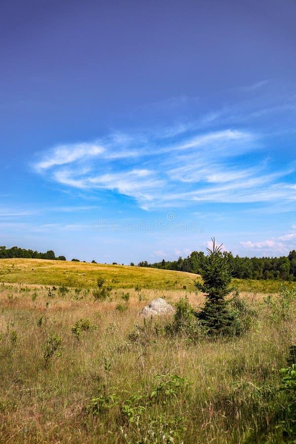 Campo degli agricoltori con il bushline definito 2 immagini stock libere da diritti