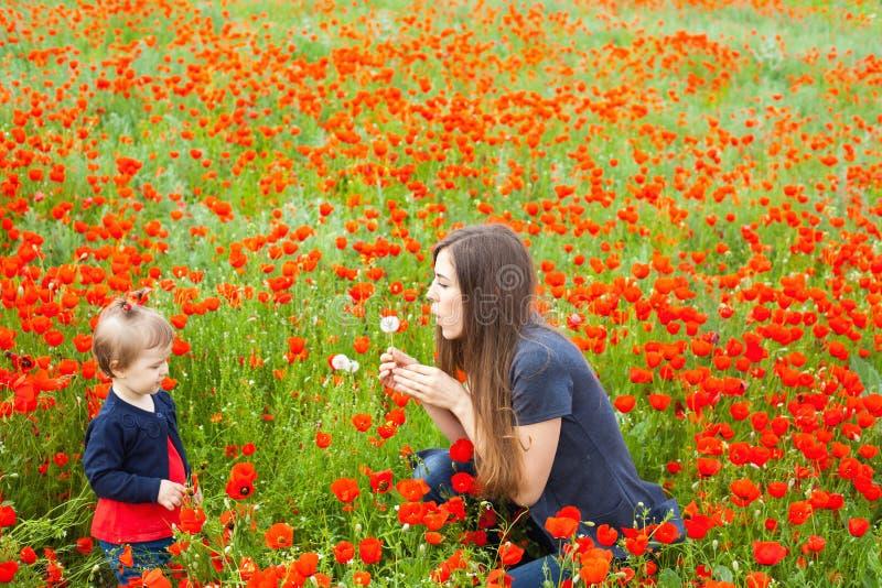 Campo dei fiori immagine stock libera da diritti