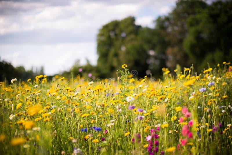 Campo dei fiori di fioritura in un parco immagine stock libera da diritti