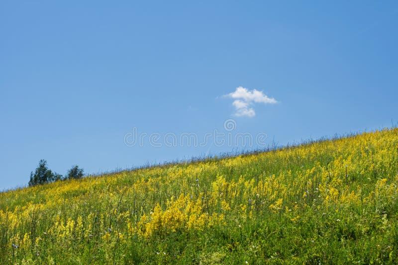 Campo dei fiori gialli immagini stock libere da diritti
