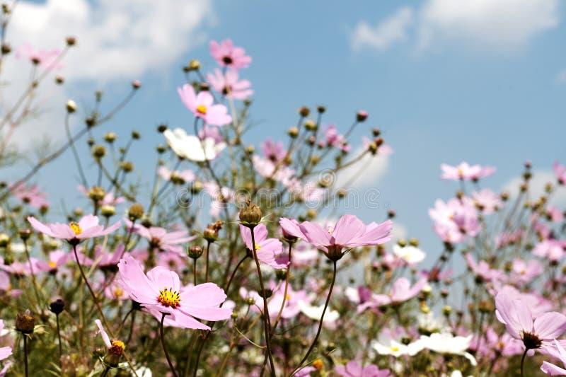 Campo dei fiori selvaggi dell'universo fotografie stock libere da diritti