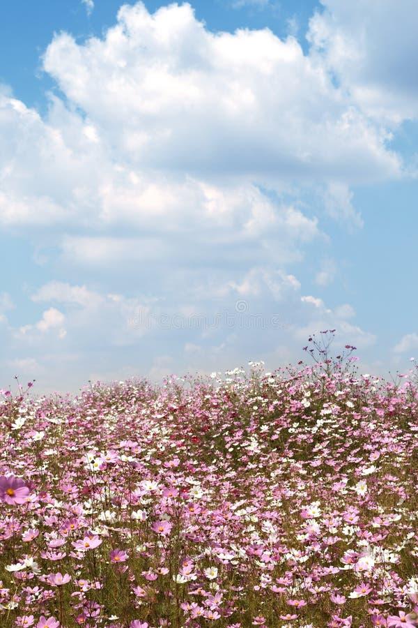 Campo dei fiori selvaggi dell'universo immagini stock libere da diritti
