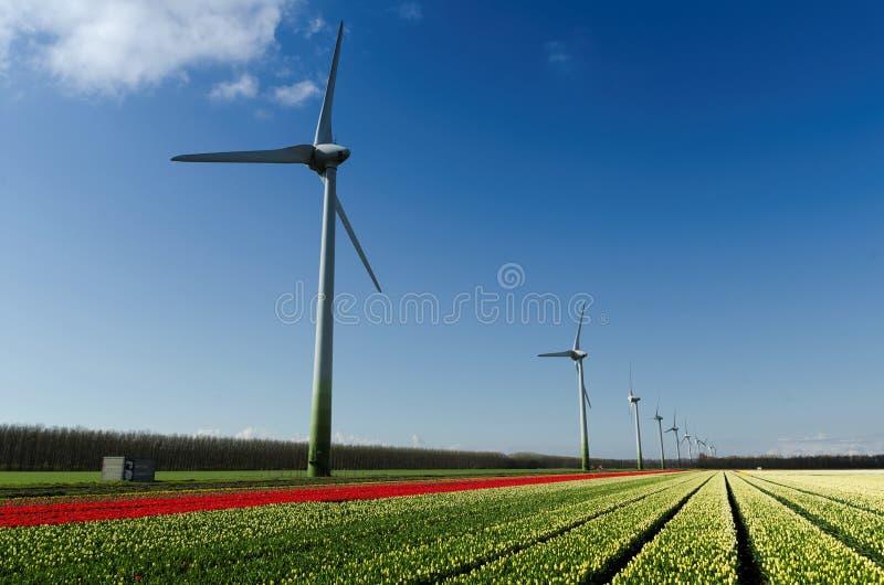 Campo dei tulipani e delle turbine di vento rossi e bianchi immagine stock libera da diritti