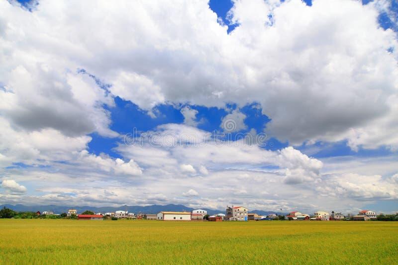 Campo del arroz de arroz con el cielo azul y la nube blanca foto de archivo