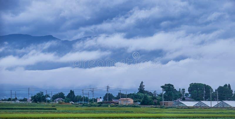 Campo del arroz en campo en Japón, 08 26 2018 imágenes de archivo libres de regalías