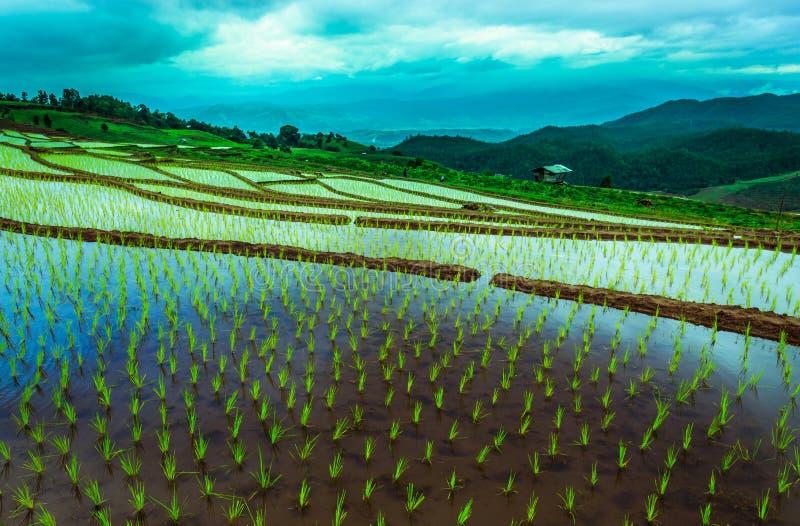 Campo del arroz en la montaña imagenes de archivo