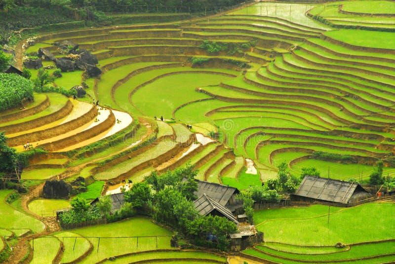Campo del arroz en la montaña de Sapa   foto de archivo