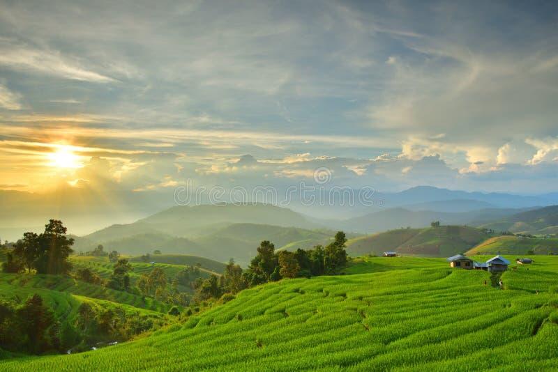 Campo del arroz en la montaña en Tailandia imagen de archivo
