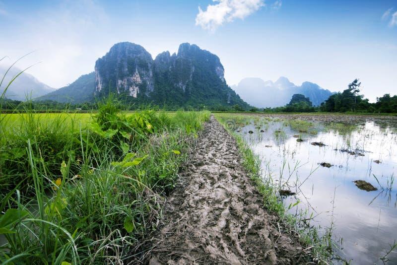 Campo del arroz en Vang Vieng Laos imagen de archivo libre de regalías