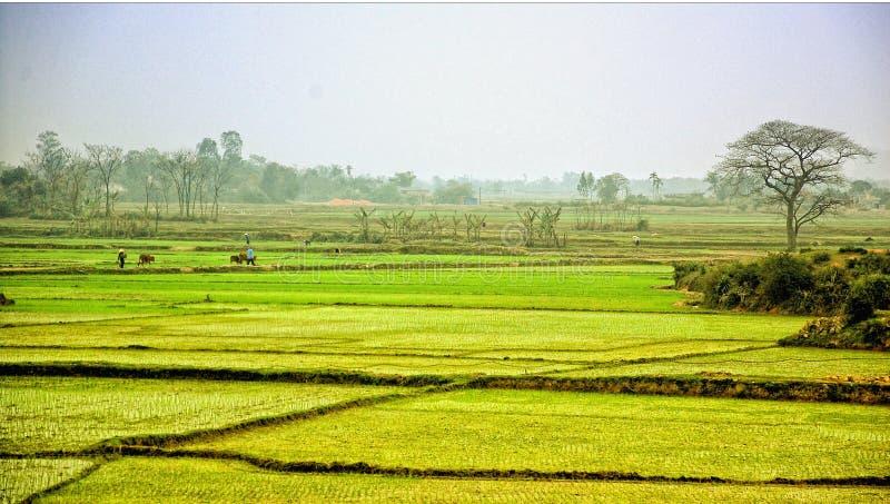 Campo del arroz en Vietnam foto de archivo libre de regalías