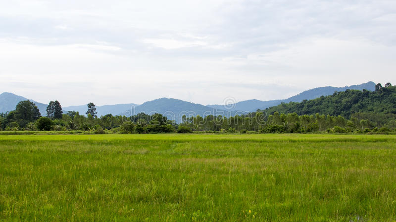 Campo del arroz y fondo verdes de la montaña fotos de archivo