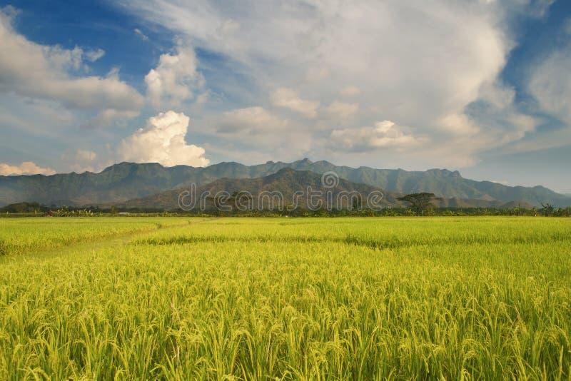 Campo del arroz y paisaje impresionantes de la montaña fotografía de archivo libre de regalías