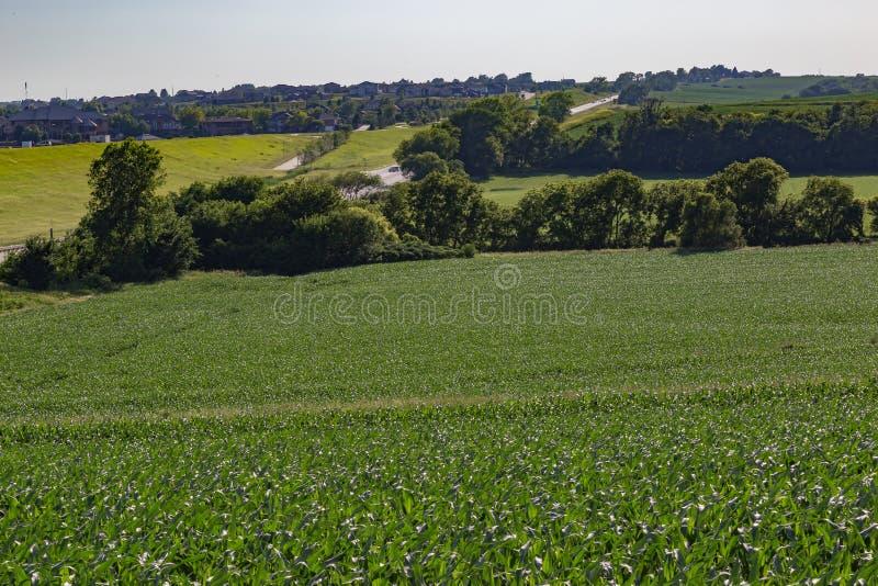 Campo del balanceo del campo de maíz joven en alguna parte en Omaha Nebraska imágenes de archivo libres de regalías