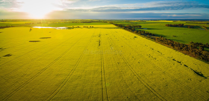 Campo del Canola en la puesta del sol que brilla intensamente en Australia - panorama aéreo foto de archivo libre de regalías