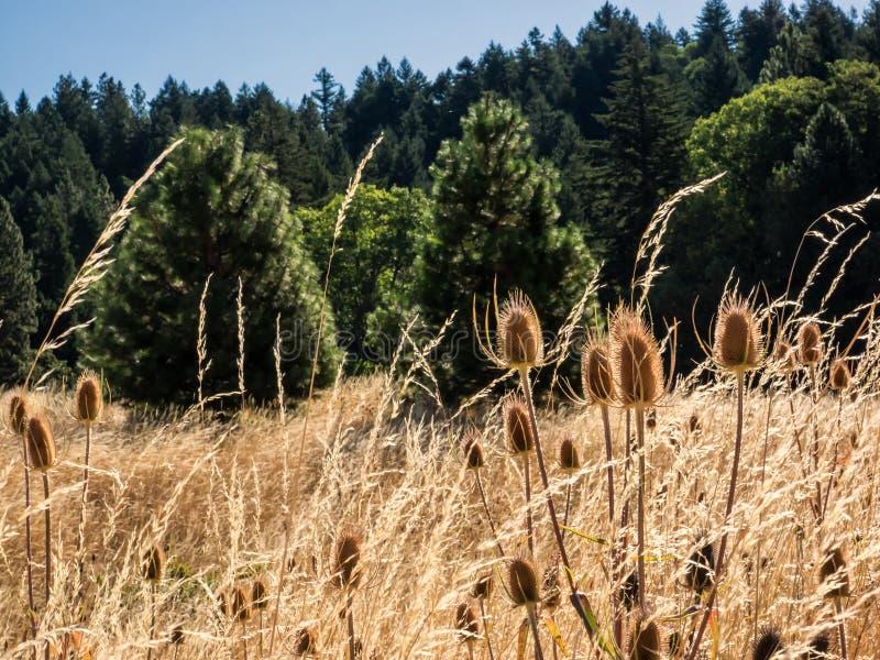 Campo del cardo y de hierba secada fotos de archivo