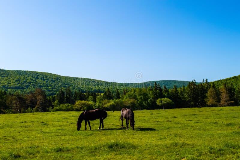Campo del cavallo fotografia stock