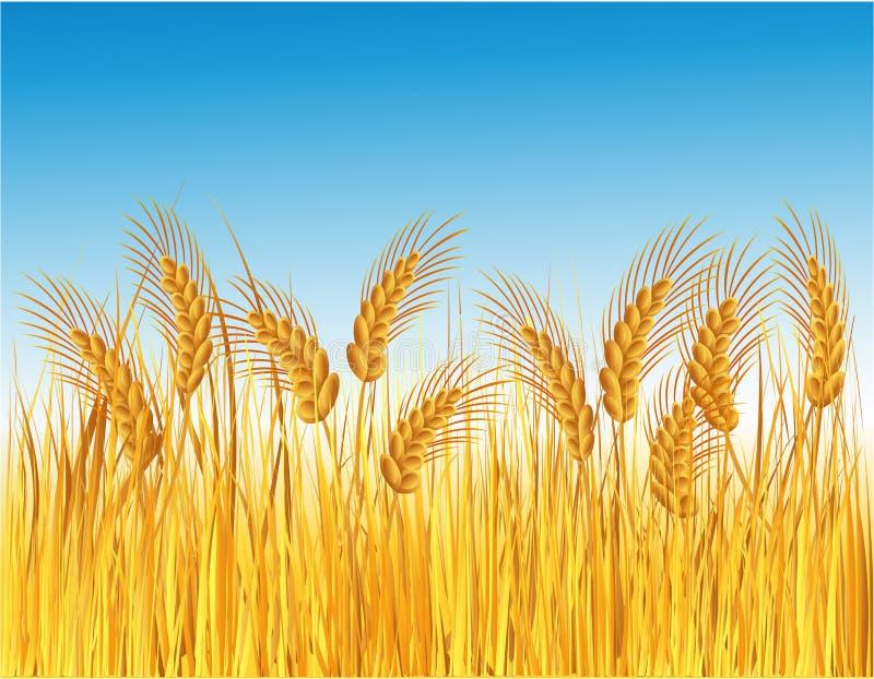 Campo del cereal ilustración del vector