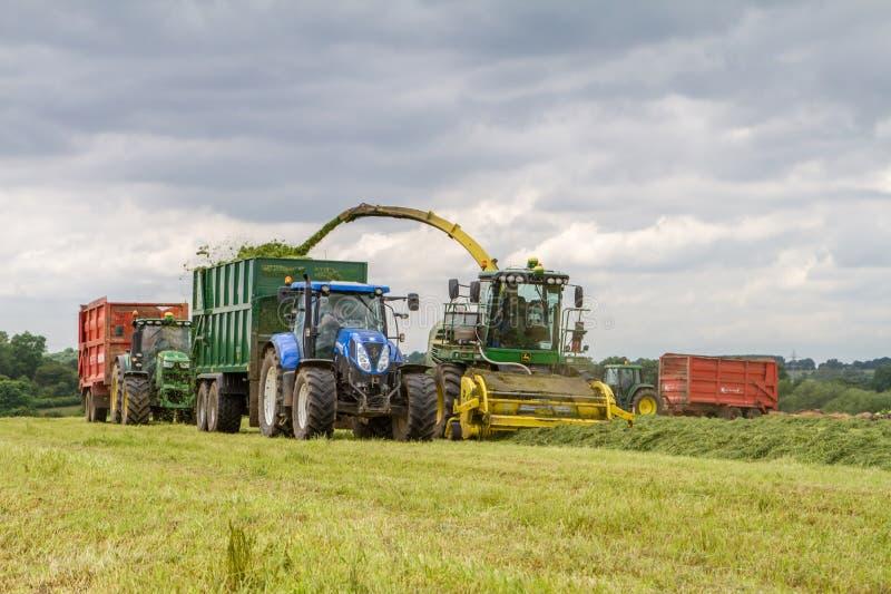 Campo del corte del forager de la máquina segador, ensilaje del cargamento en un tractor remolque foto de archivo libre de regalías