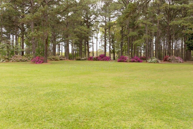 Campo del giardino fotografie stock