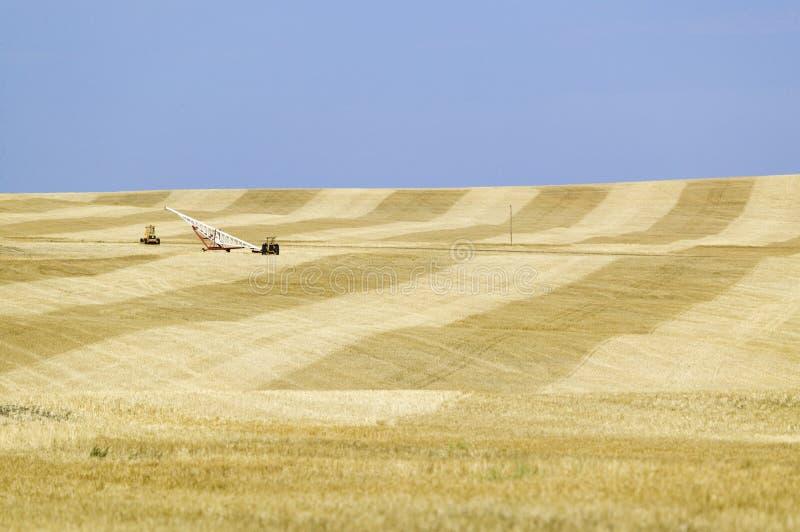 Campo del grano al costado imagenes de archivo