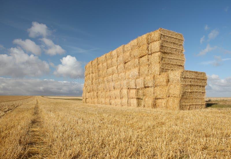 Campo del Haystack de la cosecha del verano imágenes de archivo libres de regalías