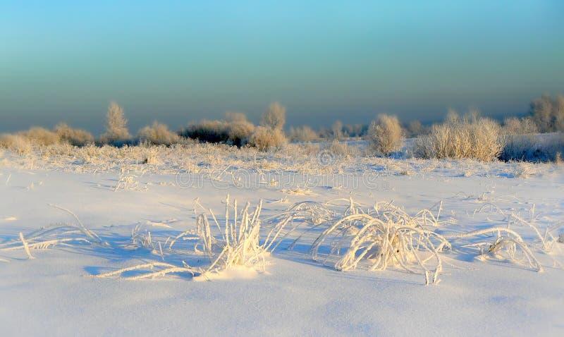 Campo del invierno foto de archivo
