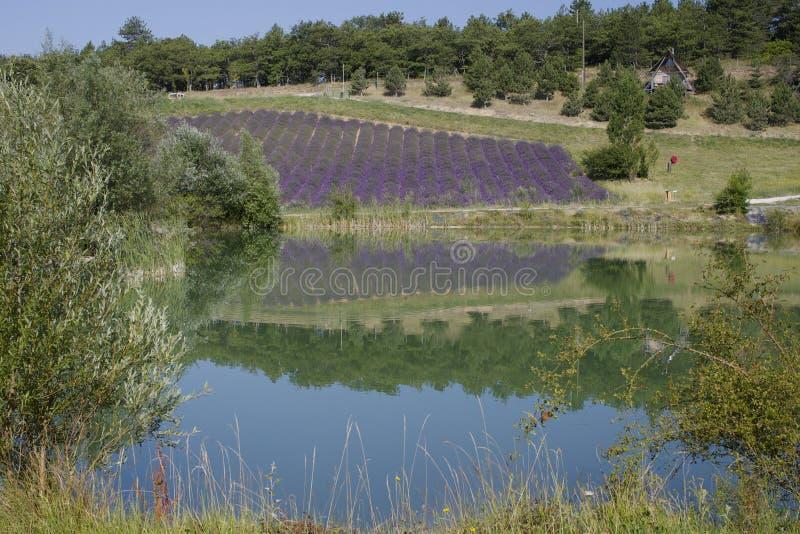 Campo del lago y de la lavanda fotografía de archivo