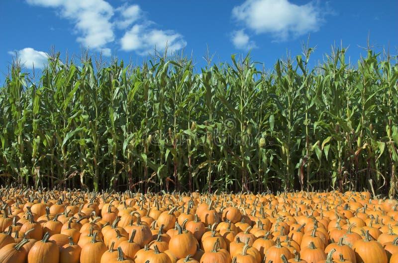 Campo del maíz y de la calabaza fotos de archivo