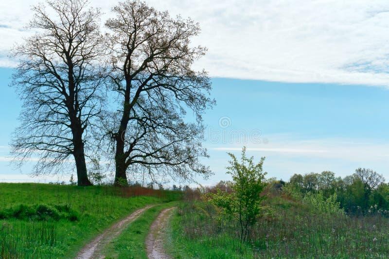 Campo del paisaje de la primavera, camino del campo, árboles y trayectoria en el campo fotos de archivo libres de regalías