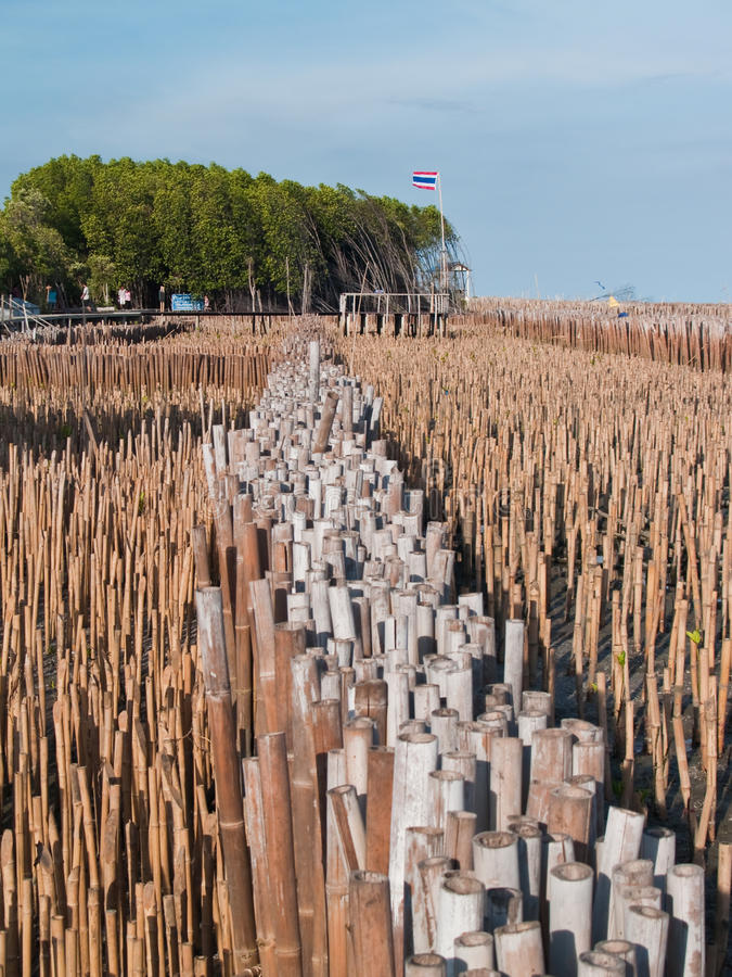 Campo del punto di bambù di vista e del tubo fotografia stock