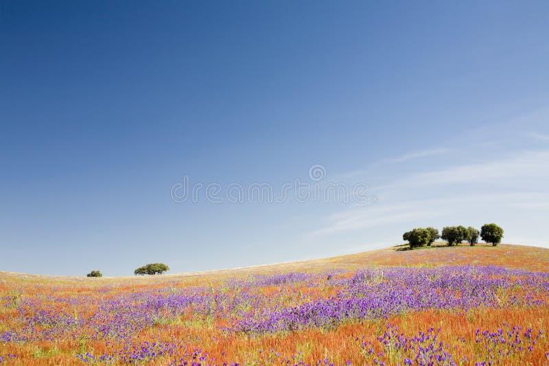 Campo del resorte - Alentejo, Portugal fotografía de archivo