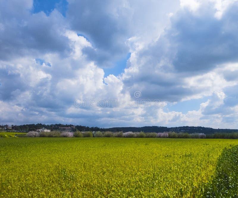 Campo del seme di ravizzone dentro con i mandorli di fioritura nelle vicinanze di Gerusalemme del fondo in Israele fotografia stock libera da diritti