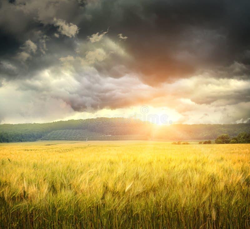 Campo del trigo con las nubes siniestras imagen de archivo libre de regalías