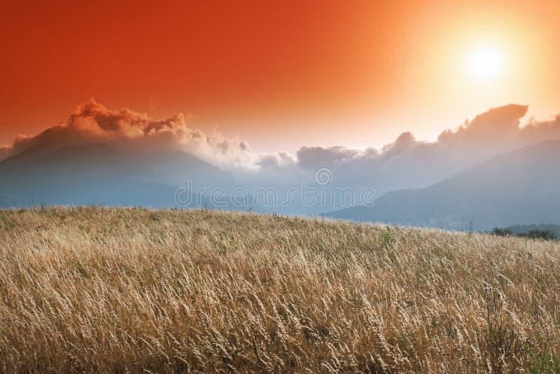 Campo del trigo en el país de Patrimonio imagenes de archivo