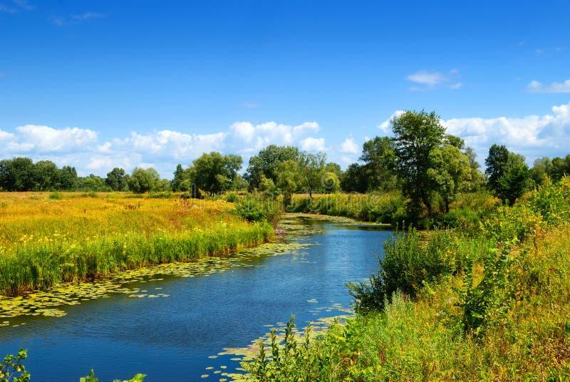 Campo del verano con el río imagen de archivo