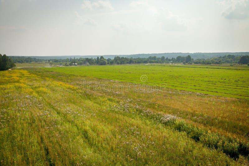 Campo del verano, región de Kaluga, Rusia foto de archivo libre de regalías