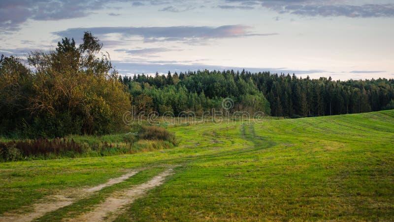 Campo del verano un campo montañoso con un bosque en el fondo Crepúsculo de la tarde fotos de archivo libres de regalías