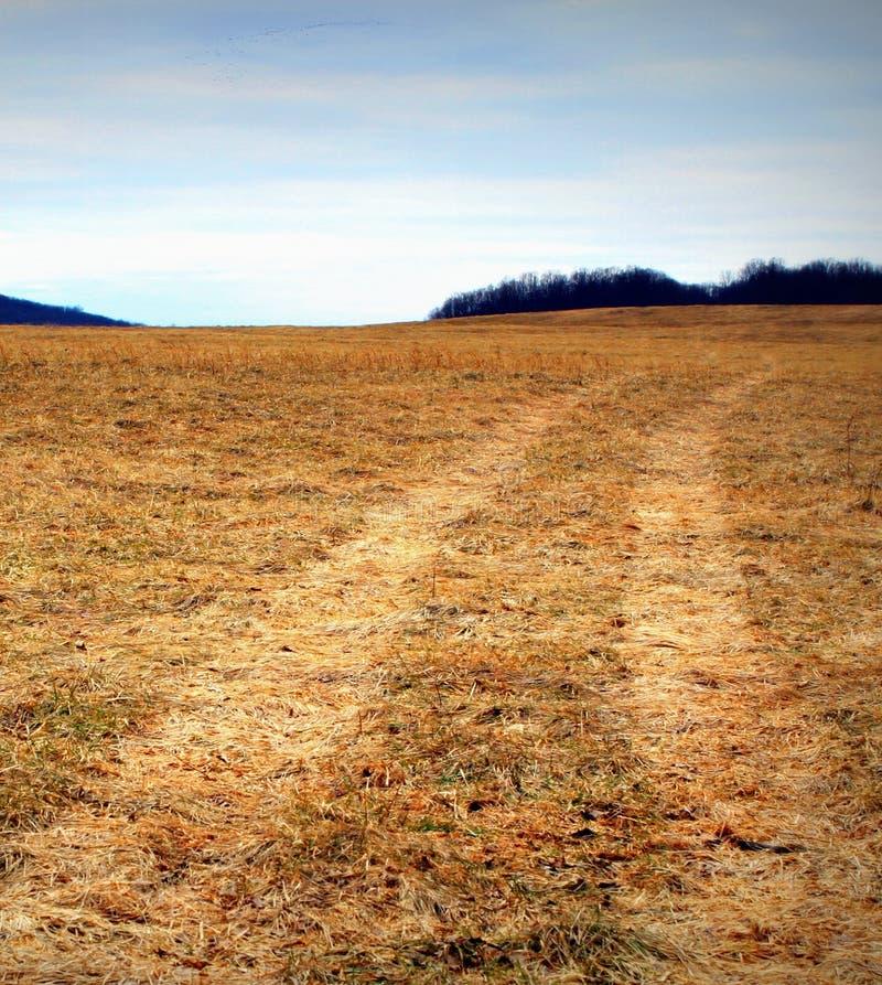 Campo dell'azienda agricola con le piste della gomma fotografia stock