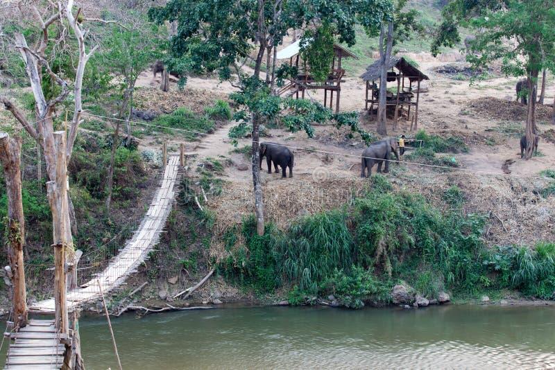 Campo dell'elefante fotografie stock