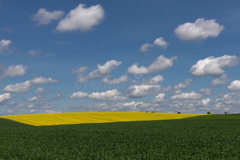 Campo della colza e del grano fotografia stock libera da diritti