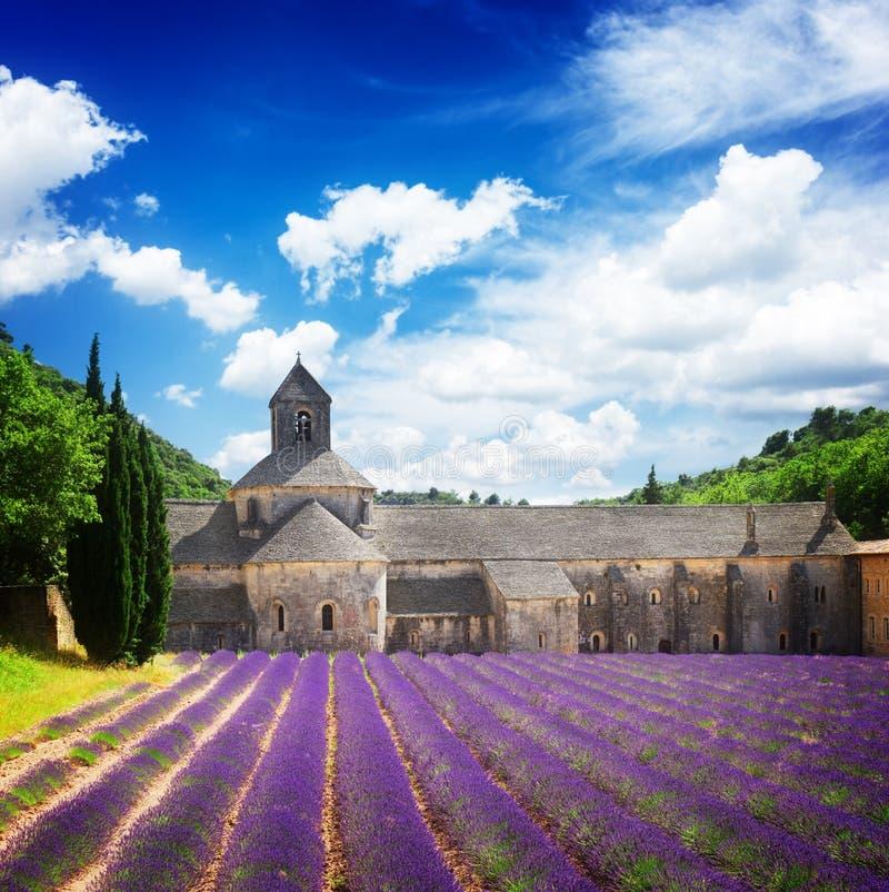 Campo della lavanda e di Abbey Senanque, Francia fotografia stock libera da diritti