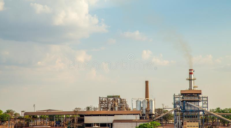 Campo della piantagione di canna da zucchero fotografie stock