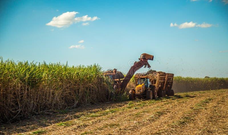 Campo della piantagione più hasvest della canna da zucchero immagini stock libere da diritti